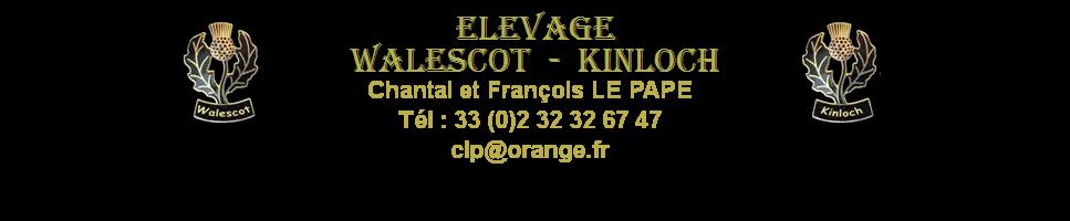 http://www.terrier-ecossais.fr
