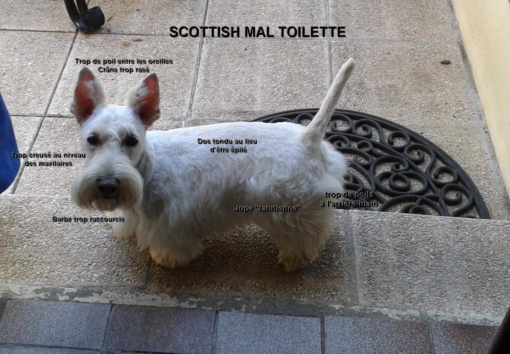 toilette-scot